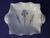 Shelley Blue Iris (11561) Pin Dish